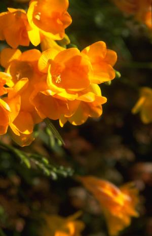 Your Garden (masterkeycoaching.com)